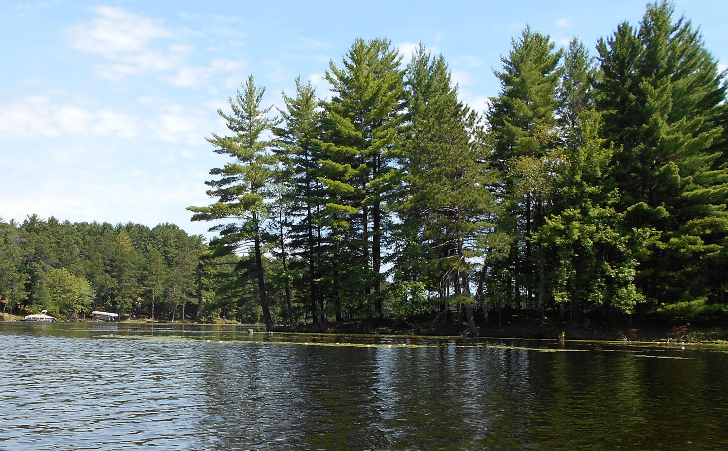 Healthy trees make healthy lakes - Star Journal
